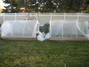 Two Hoop houses ready for winter harvests