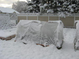 A hoop house covered with snow