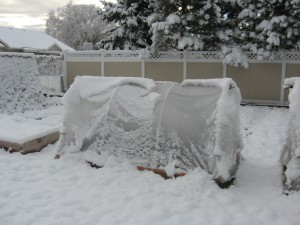 A hoop house covered in snow