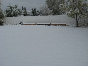 Cold Frame Management in the winter