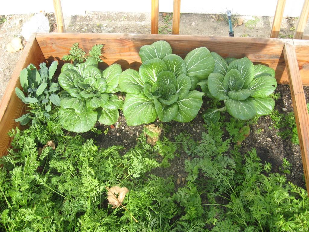 Year-Round Gardening Series Part 1