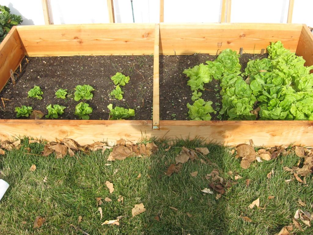 Year Round Garden Soil Preparation 4
