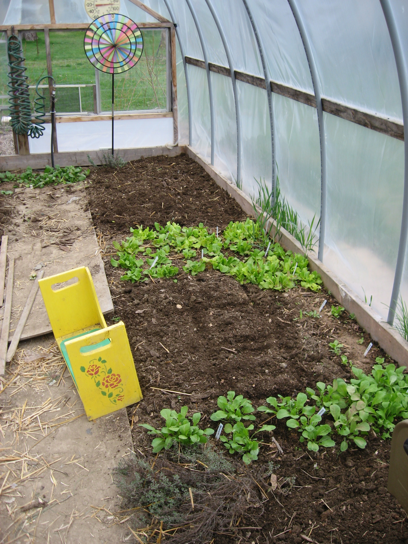 Winter Gardening Series #7 – Hoop Houses