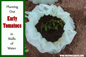 Planting Early Tomatoes