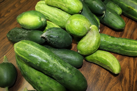Easy Refrigerator Pickles cukes