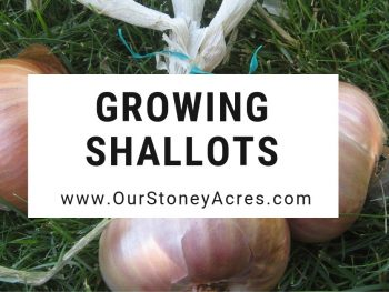 Growing Shallots - Facebook & Feature
