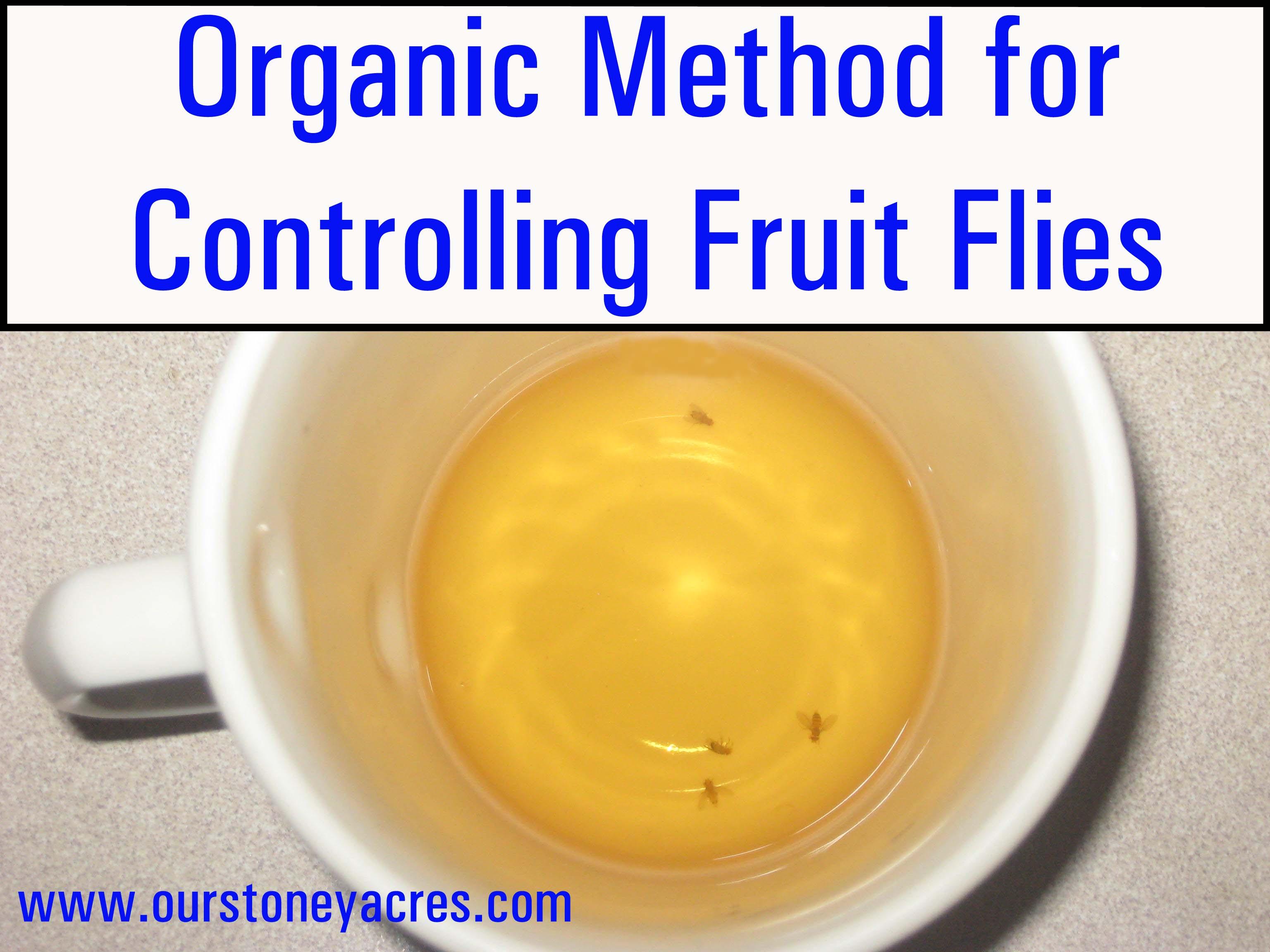 how long do fruit flies live healthy winter fruit salad