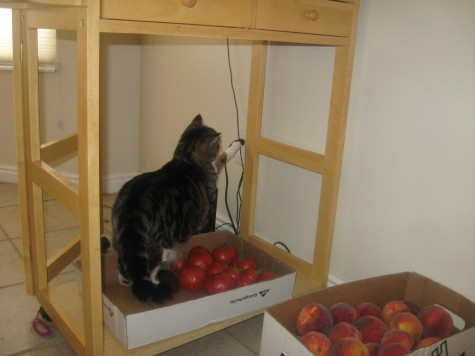 Organic Method for Controlling Fruit Flies 1