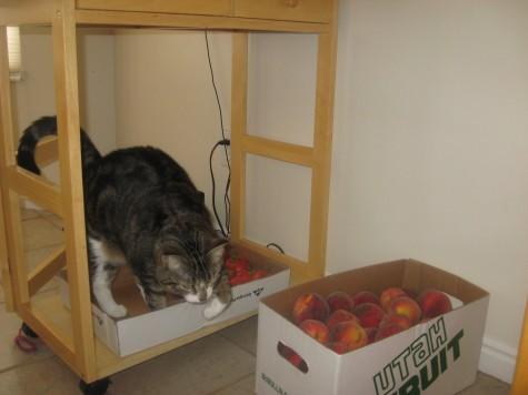 Organic Method for Controlling Fruit Flies 2