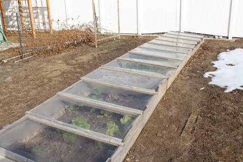 Year Round Garden Soil Preparation 6