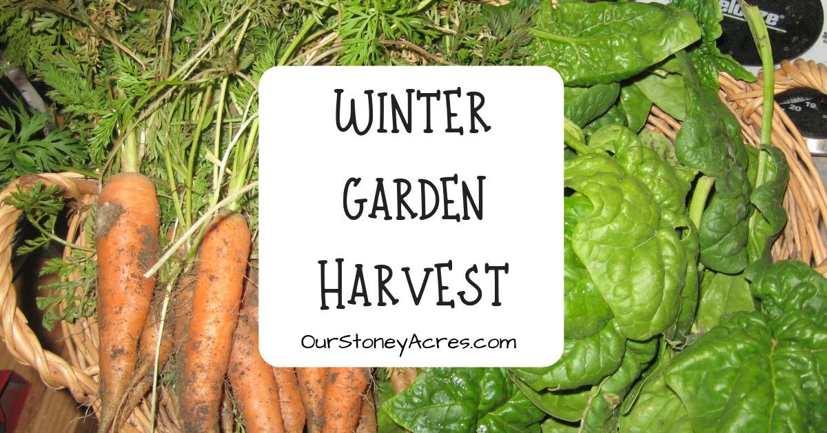 Winter Garden Harvest FB