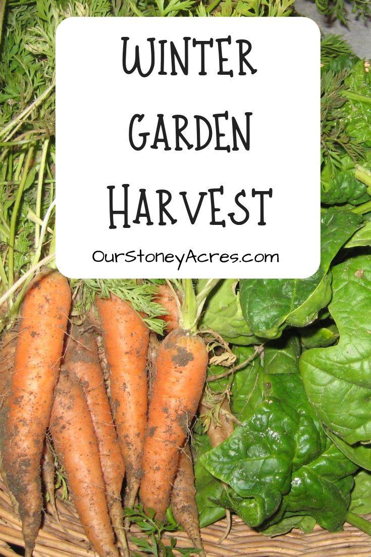 Winter Garden Harvest
