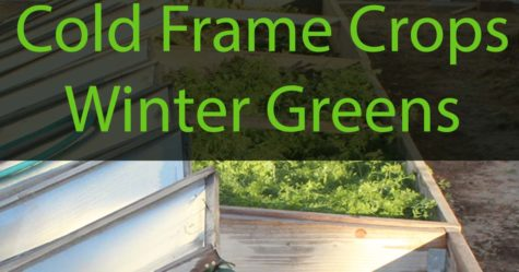 Cold Frame Crops fb