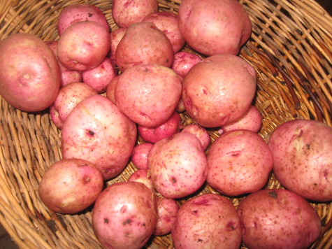 Early Potatoes 1