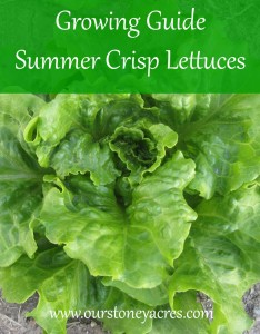 Growing Guide - Summer Crisp Lettuces