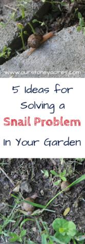 Snail Problem