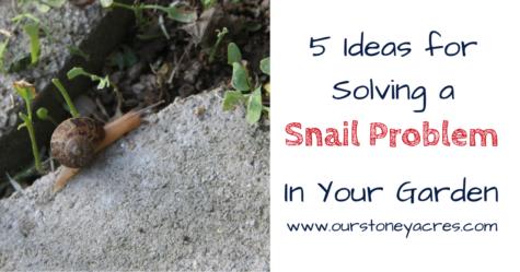 A Snail Problem - FB