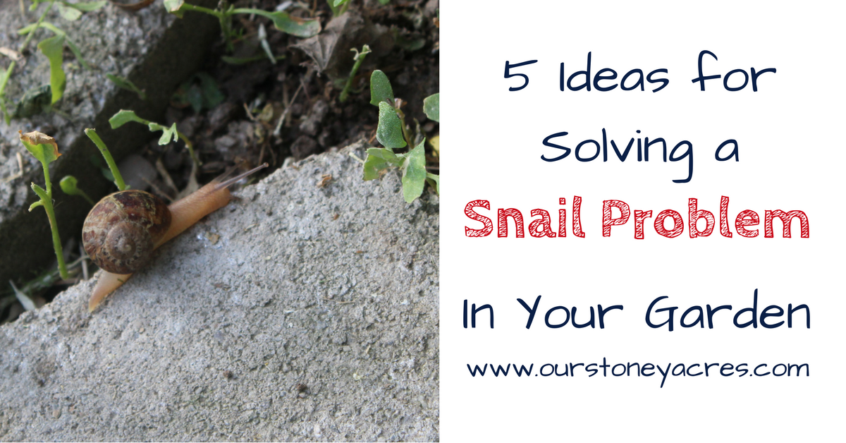 how to get rid of snails in garden naturally