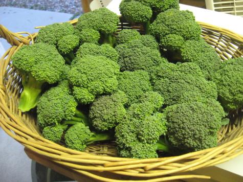 Growing a year round Garden - broccoli 1