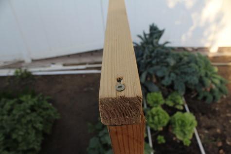 Simple Cucumber trellis 5