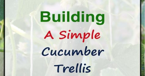 Build a Simple Cucumber Trellis fb