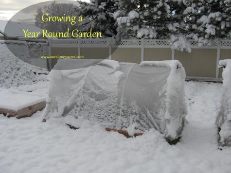 Growing a year round garden