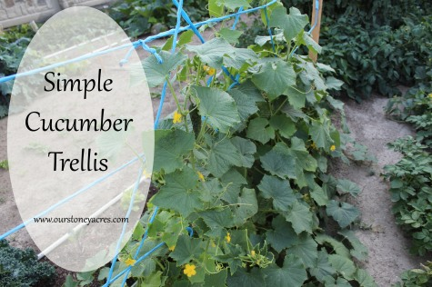 Simple Cucumber Trellis