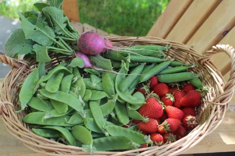 Real Food basket