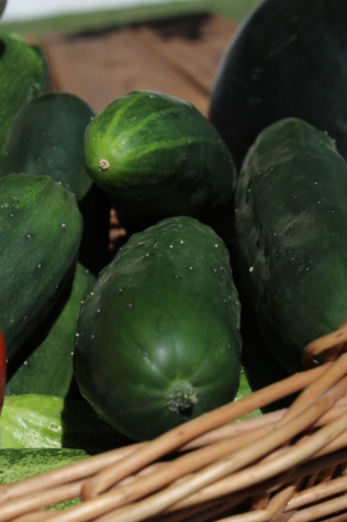 7 Easy Vegetables to Grow cucumbers