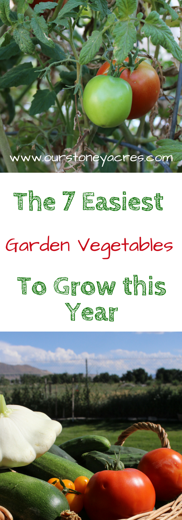 12 Vegetables To Plant In August Zone 9: 7 Easy Vegetables To Grow