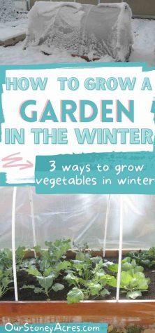 Growing Vegetables in Winter