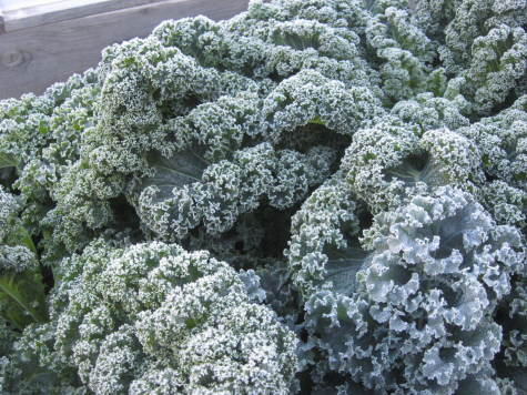 7 Easy Vegetables to Grow kale