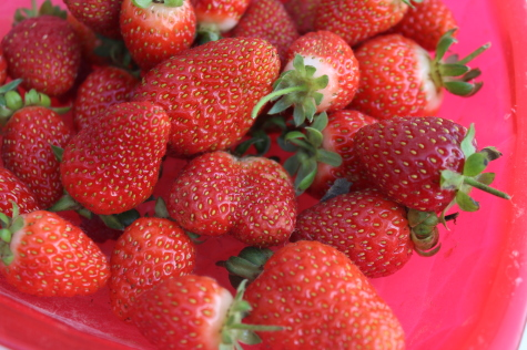 7 Easy Vegetables to Grow strawberries