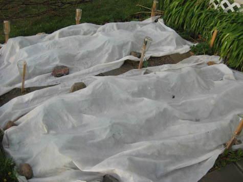 Winter Garden Structures 2