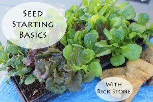 Indoor Seed Starting Basics
