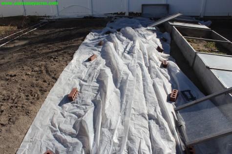 Warming the soil to plant peas