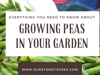 Growing Peas in Your Garden - FB