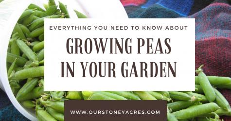 Growing Peas in Your Garden - FB