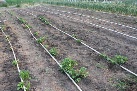 PVC Drip Irrigation Borrow