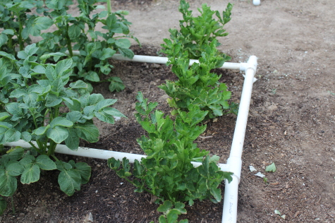 PVC Drip Irrigation tees