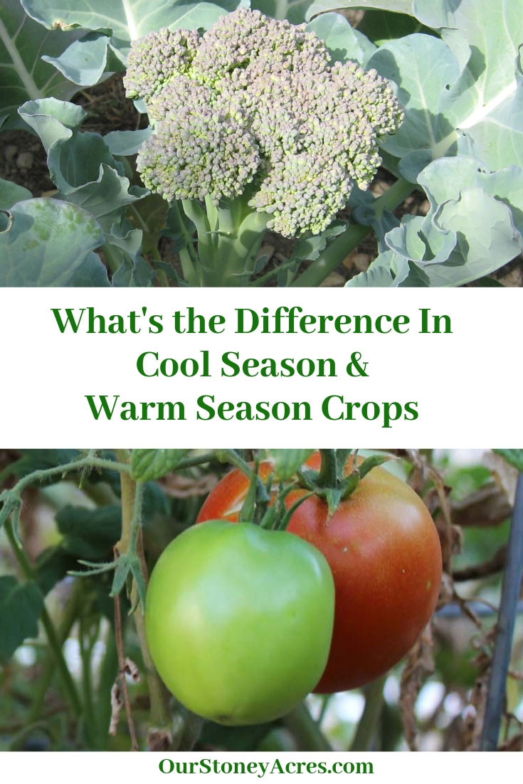 Cool And Warm Season Veggies What's the difference?