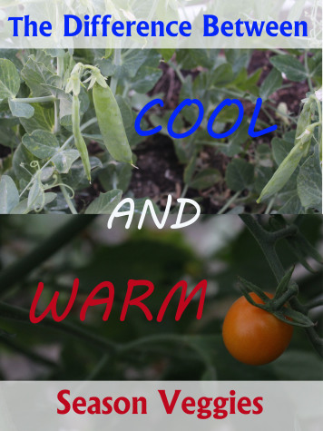 Cool and Warm season veggies