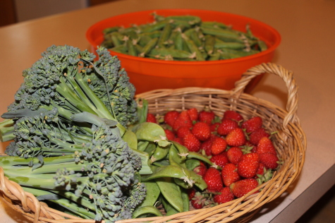 Cool and Warm season veggies harvest