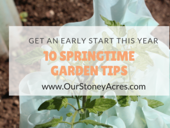 tips for your vegetable garden