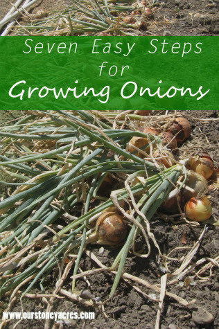 Growing Onions Cover