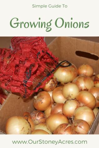 Growing Onions #3