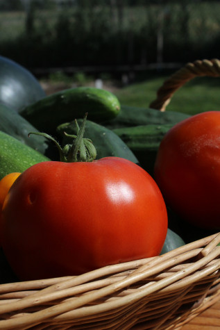 10 Growing tips for tomatoes sunshine