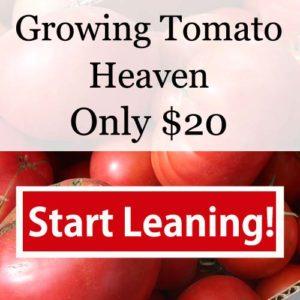 Growing Tomato Heaven - Start learning