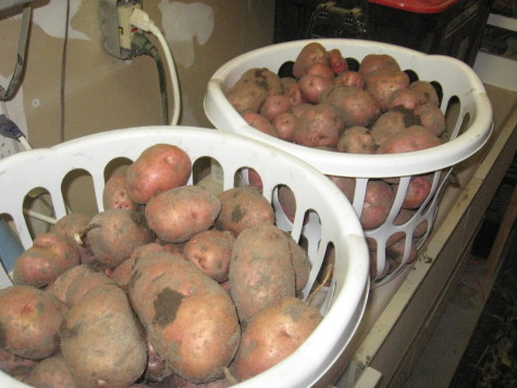 Growing Potatoes storage