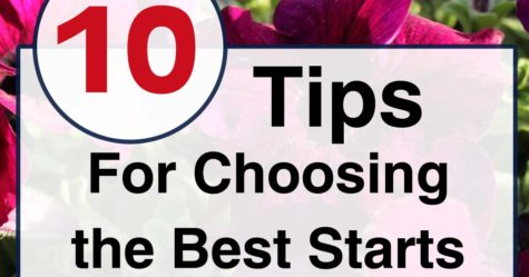 Choose the best plant starts FB